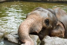 Elephant In The Wallow Stock Photos