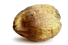 Coconut Seed Royalty Free Stock Images