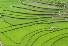 Terraced Rice Field Royalty Free Stock Photos