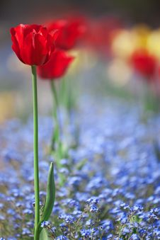 Free Flower Bed Stock Images - 19586774