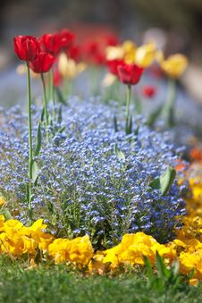 Free Flower Bed Royalty Free Stock Photo - 19586775