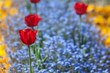 Free Flower Bed Stock Photo - 19586800