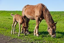 Free A Horse And A Foal Royalty Free Stock Photo - 19587275