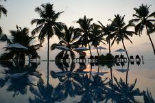 Coconut Palm Trees Reflecting In The Water Pool Royalty Free Stock Photos