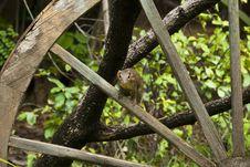 Free Squirrel Stock Image - 19587661
