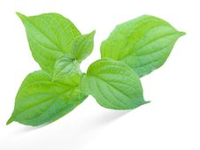 Free Green Leaf Royalty Free Stock Images - 19587779