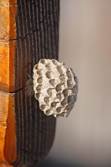 Free Wasp Nest Royalty Free Stock Photography - 19588747
