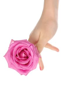 Female Hand With Pink Rose Stock Photos