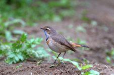Bird In Garden Stock Image