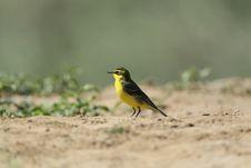 Free Bird On Land Stock Photos - 19589853