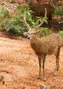Free Deer Stock Photos - 19590293