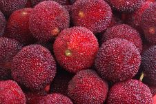 Free Wax-berry Stock Photos - 19591593