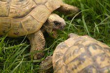 Free Turtles Stock Image - 19593551