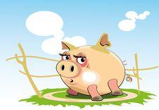 Free Pig Stock Image - 19594581