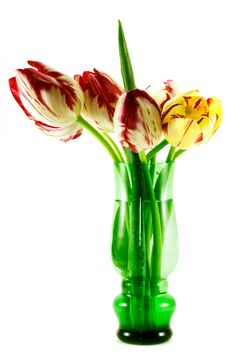 Free Tulips Stock Photos - 19595323