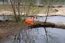 Free Flamingo Royalty Free Stock Photo - 19595635