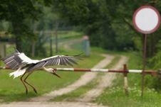 Free Landing Bird, Stork Stock Image - 19595691