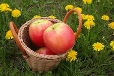 Basket With Apples On A Glade With Dandelions