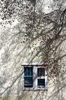Free Blue Windows And Tree Stock Photos - 19598493