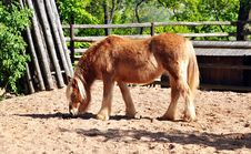 Free Przewalski S Horse Family Royalty Free Stock Photos - 19598638