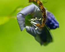 Free Inch Worm Eating A Flower Stock Photography - 19598682