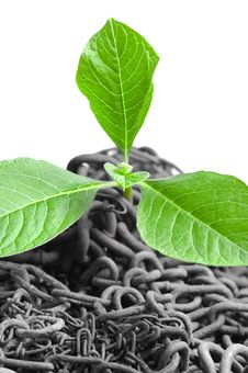 Free Green Plant Growing Stock Image - 19598861