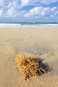 Free Seaweed Stock Image - 19599401