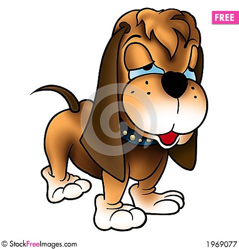 Free Dog With Long Ears Royalty Free Stock Photography - 1969077