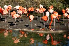 Free Flamingo Royalty Free Stock Images - 1960609