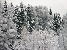 Free Winter Forest Stock Photo - 1961270