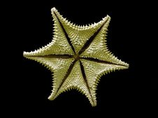Free Starfish Stock Image - 1961311