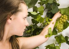 Free Beautiful Green Grape Stock Photography - 1961962
