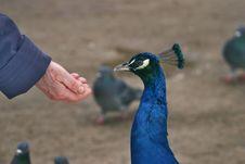 Free Bird 22 Royalty Free Stock Photography - 1963127