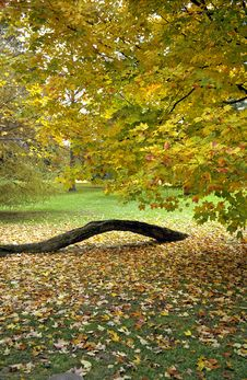 Free Fall Leaves At Hyde Park Royalty Free Stock Photos - 1963778