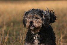 Free Portrait Of Dog Royalty Free Stock Photo - 1967575