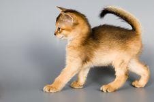 Free Kitten In Studio Royalty Free Stock Photography - 1968547