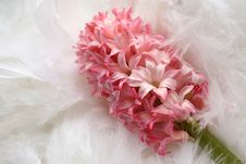 Free Background For A Greeting Card: Pink Flower On Plumage Royalty Free Stock Photo - 1968875