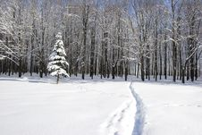 Free Winter Stock Image - 1969591