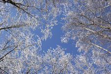 Free Winter Royalty Free Stock Image - 1969646