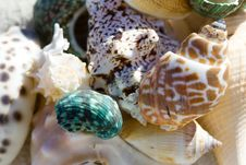 Free Shell Ending On The Beach Royalty Free Stock Photography - 1969987