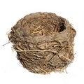 Free Bird Nest, Isolated Royalty Free Stock Image - 19601116