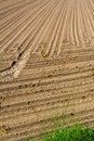 Free Area Of Arable Land Stock Photos - 19602483