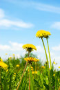 Free Summer Landscape, With Colour And Sky, Vertically. Stock Photo - 19603730