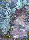 Free Lichen On Rock. Royalty Free Stock Photo - 19604585