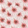 Free Pink Gerbera Flower Stock Photo - 19605210