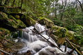 Free Forest Stream Cascades Through Rocks Royalty Free Stock Photos - 19605728