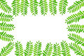 Free Green Fresh Leaves Frame Stock Photography - 19606152