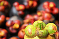 Free Mangosteen Royalty Free Stock Images - 19606329