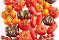 Free Tomatoes Stock Photo - 19609090