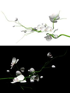 Free 3d Orchid Set Stock Photos - 19600733